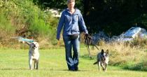 Verhaltenstherapie für Hunde Silke Prigge